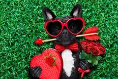 Σκυλί βαλεντίνων ερωτευμένο στοκ φωτογραφία