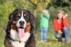 Σκυλί βουνών Bernese Στοκ φωτογραφία με δικαίωμα ελεύθερης χρήσης