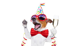 σκυλί γενεθλίων ευτυχές στοκ εικόνα με δικαίωμα ελεύθερης χρήσης