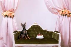 Σκυλί γενεθλίων με το κέικ Κόμμα τεριέ παιχνιδιών Στοκ εικόνα με δικαίωμα ελεύθερης χρήσης