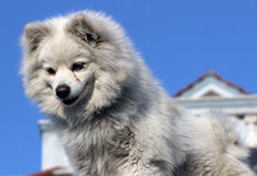 Σκυλί για την ασφάλεια Στοκ Εικόνες