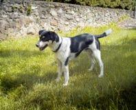 Σκυλί Εικόνα χρώματος Στοκ φωτογραφία με δικαίωμα ελεύθερης χρήσης