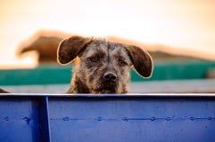 σκυλί ενδιαφερόμενο Στοκ Εικόνες