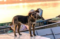 σκυλί ενδιαφερόμενο Στοκ φωτογραφίες με δικαίωμα ελεύθερης χρήσης