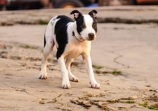 σκυλί ενδιαφερόμενο στοκ εικόνα