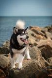 Σκυλί εν πλω Στοκ φωτογραφίες με δικαίωμα ελεύθερης χρήσης