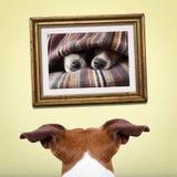 Σκυλί ερωτευμένο Στοκ Εικόνες