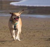 σκυλί ευτυχές στοκ φωτογραφίες