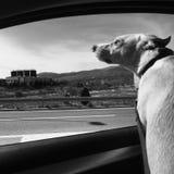 σκυλί ευτυχές Στοκ φωτογραφία με δικαίωμα ελεύθερης χρήσης