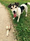 σκυλί εύθυμο Στοκ εικόνα με δικαίωμα ελεύθερης χρήσης