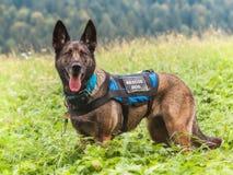 Σκυλί διάσωσης, Mala Fatra, Σλοβακία Στοκ φωτογραφίες με δικαίωμα ελεύθερης χρήσης
