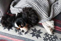 Σκυλί κάτω από το κάλυμμα Στοκ φωτογραφίες με δικαίωμα ελεύθερης χρήσης