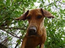 σκυλί κάτω Στοκ Εικόνα