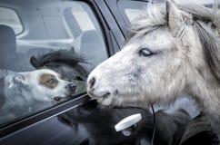 Σκυλί και άλογο Στοκ Φωτογραφίες