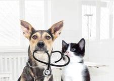 Σκυλί και ένας κτηνίατρος γατών Στοκ εικόνες με δικαίωμα ελεύθερης χρήσης