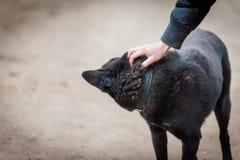 Σκυλί και ανθρώπινο χέρι Στοκ φωτογραφία με δικαίωμα ελεύθερης χρήσης