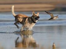 Σκυλί και βροχοπούλι Στοκ εικόνες με δικαίωμα ελεύθερης χρήσης