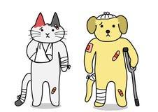 Σκυλί και γάτα, ζημία Στοκ Εικόνα