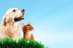 Σκυλί και γάτα μαζί στη χλόη, έννοια άνοιξη Στοκ εικόνα με δικαίωμα ελεύθερης χρήσης
