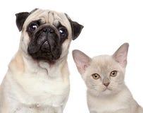 Σκυλί και γάτα Στοκ Φωτογραφίες