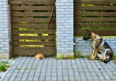 Σκυλί και γάτα Στοκ Φωτογραφία