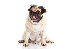 Σκυλί και γυαλιά που απομονώνονται στο άσπρο υπόβαθρο Στοκ Φωτογραφία