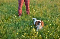 Σκυλί και γυναίκα σε έναν τομέα Στοκ Εικόνες