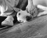 Σκυλί και εγώ Στοκ εικόνες με δικαίωμα ελεύθερης χρήσης