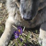 Σκυλί και λιβελλούλη Στοκ Εικόνα