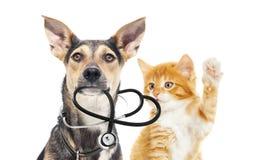 Σκυλί και μια γάτα και ένα στηθοσκόπιο Στοκ φωτογραφία με δικαίωμα ελεύθερης χρήσης
