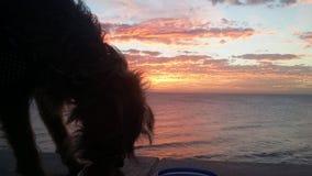 Σκυλί και ο ωκεανός Στοκ φωτογραφίες με δικαίωμα ελεύθερης χρήσης