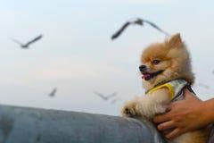 Σκυλί και πετώντας seagull Στοκ φωτογραφία με δικαίωμα ελεύθερης χρήσης