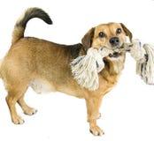 Σκυλί και σχοινί στοκ εικόνα με δικαίωμα ελεύθερης χρήσης
