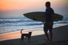 Σκυλί και Surfer στοκ εικόνες
