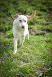 Σκυλί καταφυγίων Στοκ εικόνες με δικαίωμα ελεύθερης χρήσης