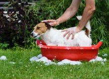 Σκυλί κατοικίδιων ζώων πλύσης ατόμων στη λεκάνη με τον αφρό σαμπουάν και σαπουνιών Στοκ εικόνες με δικαίωμα ελεύθερης χρήσης