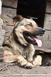 Σκυλί κοντά σε ένα ρείθρο Στοκ εικόνες με δικαίωμα ελεύθερης χρήσης