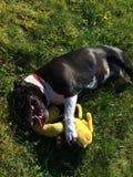Σκυλί κοριτσάκι Στοκ φωτογραφίες με δικαίωμα ελεύθερης χρήσης