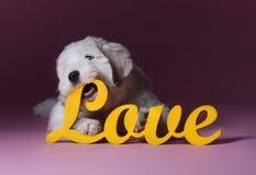 Σκυλί κουταβιών αγάπης Στοκ Φωτογραφίες