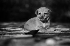 Σκυλί κουταβιών μόνο Στοκ Εικόνα