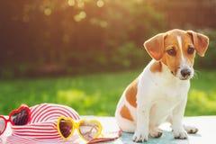 Σκυλί κουταβιών που στον ήλιο η μαλακή εστίαση Στοκ Φωτογραφίες