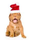 Σκυλί κουταβιών του Μπορντώ στην κόκκινη συνεδρίαση καπέλων Χριστουγέννων στο μέτωπο Απομονωμένος στο λευκό στοκ φωτογραφία με δικαίωμα ελεύθερης χρήσης