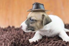 Σκυλί κουταβιών του Jack russel στο ύφασμα και το καπέλο Στοκ εικόνα με δικαίωμα ελεύθερης χρήσης