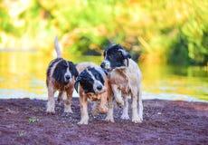 Σκυλί κουταβιών landseer Στοκ φωτογραφία με δικαίωμα ελεύθερης χρήσης