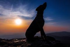 Σκυλί κυνηγόσκυλων σε έναν βράχο στο ηλιοβασίλεμα στοκ εικόνες με δικαίωμα ελεύθερης χρήσης