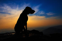Σκυλί κυνηγόσκυλων σε έναν βράχο στο ηλιοβασίλεμα στοκ εικόνα
