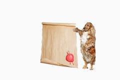 Σκυλί με έναν πάπυρο για να προσθέσει το κείμενο Στοκ Φωτογραφίες