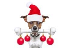 Σκυλί με ένα κόκκαλο για τα Χριστούγεννα στοκ εικόνα