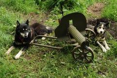Σκυλί με ένα ρωσικό πυροβόλο όπλο Στοκ Εικόνες