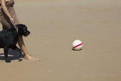 Σκυλί με μια σφαίρα Στοκ εικόνες με δικαίωμα ελεύθερης χρήσης